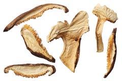 Fatias secadas do cogumelo de shiitake isoladas no fundo branco Imagens de Stock Royalty Free