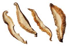 Fatias secadas do cogumelo de shiitake isoladas no fundo branco Imagem de Stock