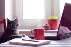 Fatigué du travail faites la pause-café photographie stock libre de droits