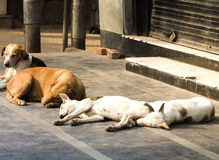Fatigue and drowsiness of dogs. Animals that have not been washed away from the owner make it hungry and tired of the road Royalty Free Stock Photos