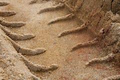 Fatiguez les pistes dans le sable photographie stock