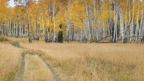 Fatiguez les pistes entrant dans une forêt de trembles dans Autum Photos libres de droits