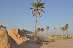 Fatnassa, Sahara del nord, Tunisia Fotografia Stock Libera da Diritti