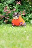 Fatness κήπων στο πορτοκάλι Στοκ εικόνες με δικαίωμα ελεύθερης χρήσης