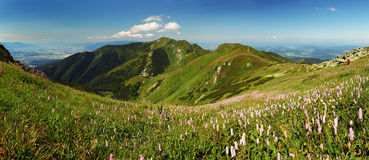 Fatra mountain panorama with flower - Slovakia Royalty Free Stock Image