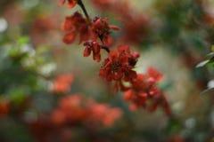 Fatta av kvitten med blommor Arkivfoto