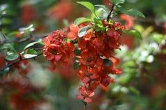 Fatta av kvitten med blommor Arkivfoton
