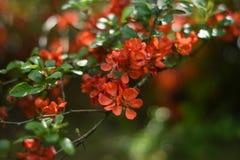 Fatta av kvitten med blommor Arkivbilder