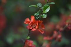 Fatta av kvitten med blommor Royaltyfri Fotografi