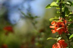 Fatta av kvitten med blommor Fotografering för Bildbyråer