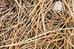 Fatta Forest Background Royaltyfria Bilder