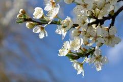 Fatta i blomning med himlen i bakgrund Arkivbild