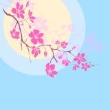 Fatta körsbärsröda blomningar Arkivfoto