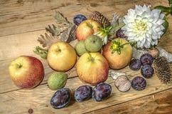 Fatta med den vita dahlian om äpplen, katrinplommoner, fikonträd och muttrar Arkivbilder