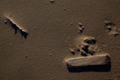 Fatta, och drivved poserar för en Sandy Windswept Beach Abstract Arkivbilder