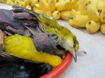 Fattig fågel Royaltyfria Foton