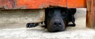 Fattig hund Fotografering för Bildbyråer