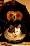 Fattig katt Royaltyfri Fotografi
