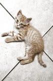 Fattig liten katt Arkivfoton