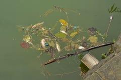Fattiga fiskar Royaltyfri Bild
