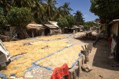Fattiga kojahavsväxtodlare, Nusa Penida, Indonesien fotografering för bildbyråer