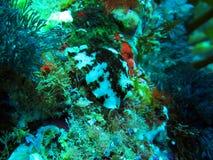 Fattiga riddareöar undervattens- Marine Reserve Royaltyfria Foton