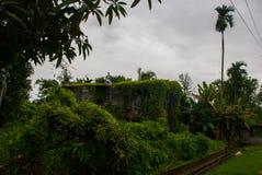 Fattigt trähus som är bevuxet med gröna växter, stad Bintulu, Borneo, Sarawak, Malaysia Royaltyfria Bilder