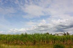 fattoria Fotografie Stock