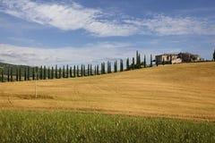 Fattoria con il cipresso, Toscana Fotografie Stock