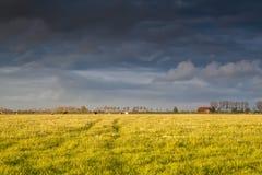 Fattoria e bestiame sul pascolo prima del tramonto Immagini Stock