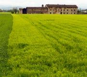 Fattoria nel campo verde Fotografia Stock