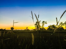 Fattoria nel giacimento del riso con alba di mattina ed il blu Fotografia Stock Libera da Diritti