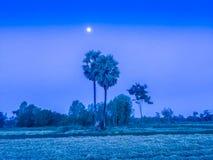 Fattoria nel giacimento del riso con alba di mattina ed il blu Immagini Stock Libere da Diritti