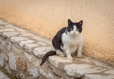 Fatty cat. Black and white stray fatty cat sitting by the wall and looking us Royalty Free Stock Photos
