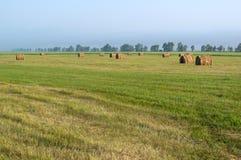 Fatura de feno, colhendo, lotes do monte de feno nos campos Foto de Stock