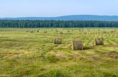 Fatura de feno, colhendo, lotes do monte de feno nos campos Imagem de Stock Royalty Free