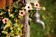 Faucet and flowers Royalty Free Stock Photo