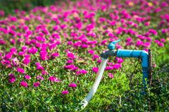 The faucet in the garden. Faucet in the flower garden Royalty Free Stock Image