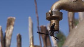 Faucet w Ethiopia z obcieknięcie wodą zdjęcie wideo