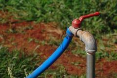 Faucet z błękitną gumową tubką W ogródzie Obraz Stock