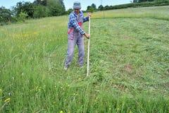 Fauchage de l'herbe de la manière traditionnelle de village avec la faux Photographie stock libre de droits
