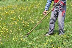 Fauchage de l'herbe de la manière traditionnelle de village avec la faux Photo stock