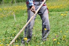 Fauchage de l'herbe de la manière traditionnelle de village avec la faux Image libre de droits