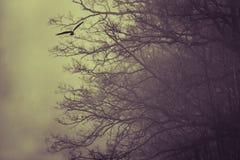 Faucon avec l'arbre mort à l'arrière-plan Photographie stock libre de droits