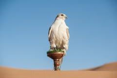 Faucon dans un désert Photographie stock