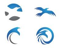 Faucon Eagle Bird Logo Template Image stock