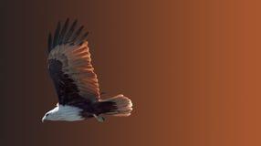 Faucon en vol sur une chasse Image stock