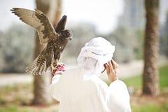 Faucon fâché Image libre de droits
