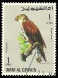 Faucon ferrugineux image libre de droits