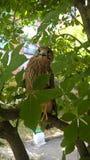 Faucon sur la branche Photos stock